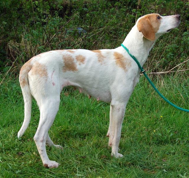 Luxury Dog Kennels Manchester